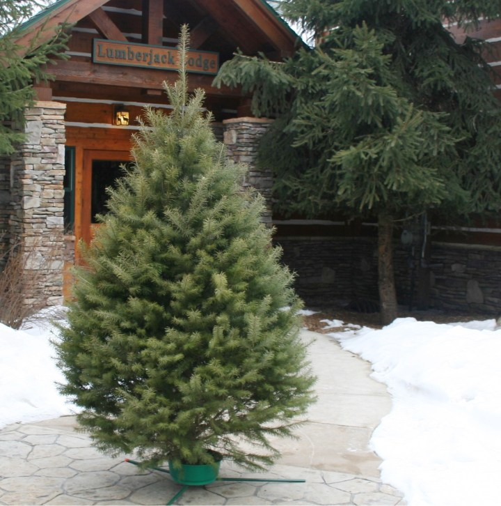 Hallmark Fresh-Cut Christmas Tree